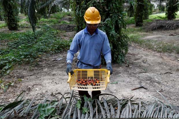 Malaysian palm oil price up on expectation of better export data